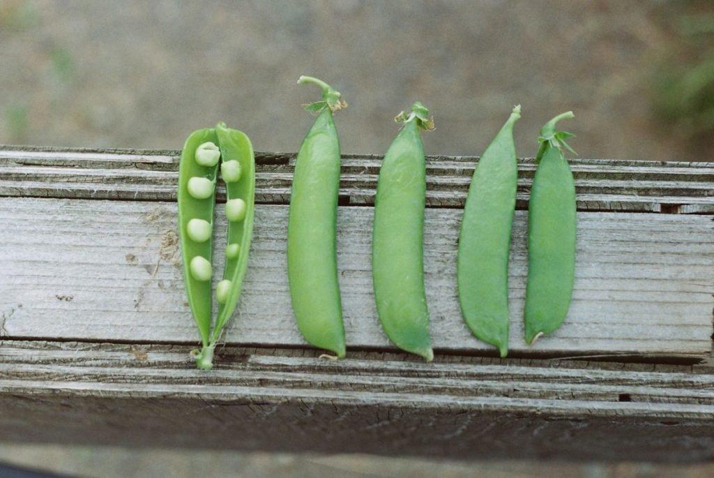 Photo of pea pods