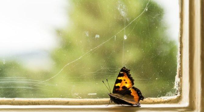 Photo of butterfly in windowsill