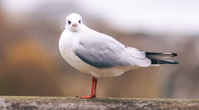 Photo of seagull on railing