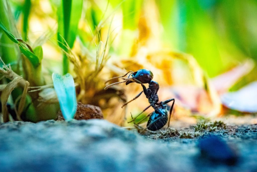 Close up photo of ant in grass