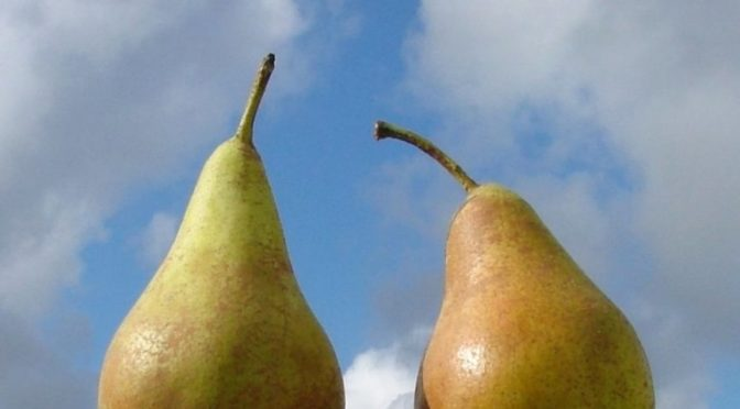 Pears in front of sky