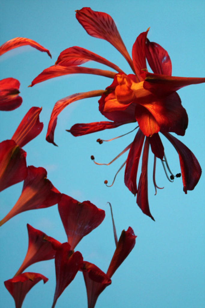 Red flowers on blue background