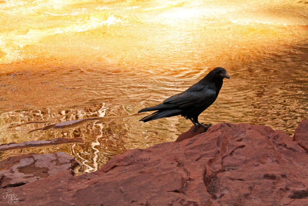 Photo of bird in front of sun-reflecting water