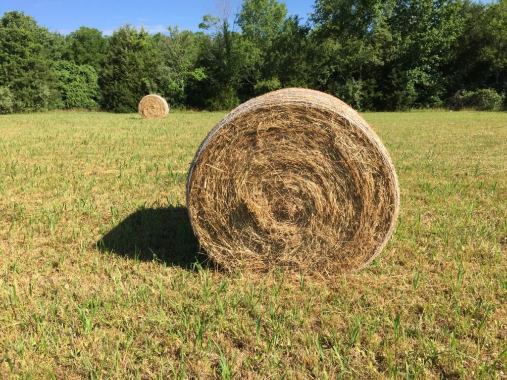 Photo of hay bales in field