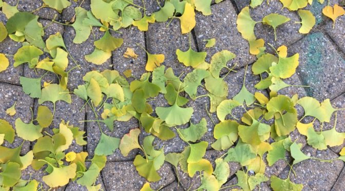 Photo of leaves on ground